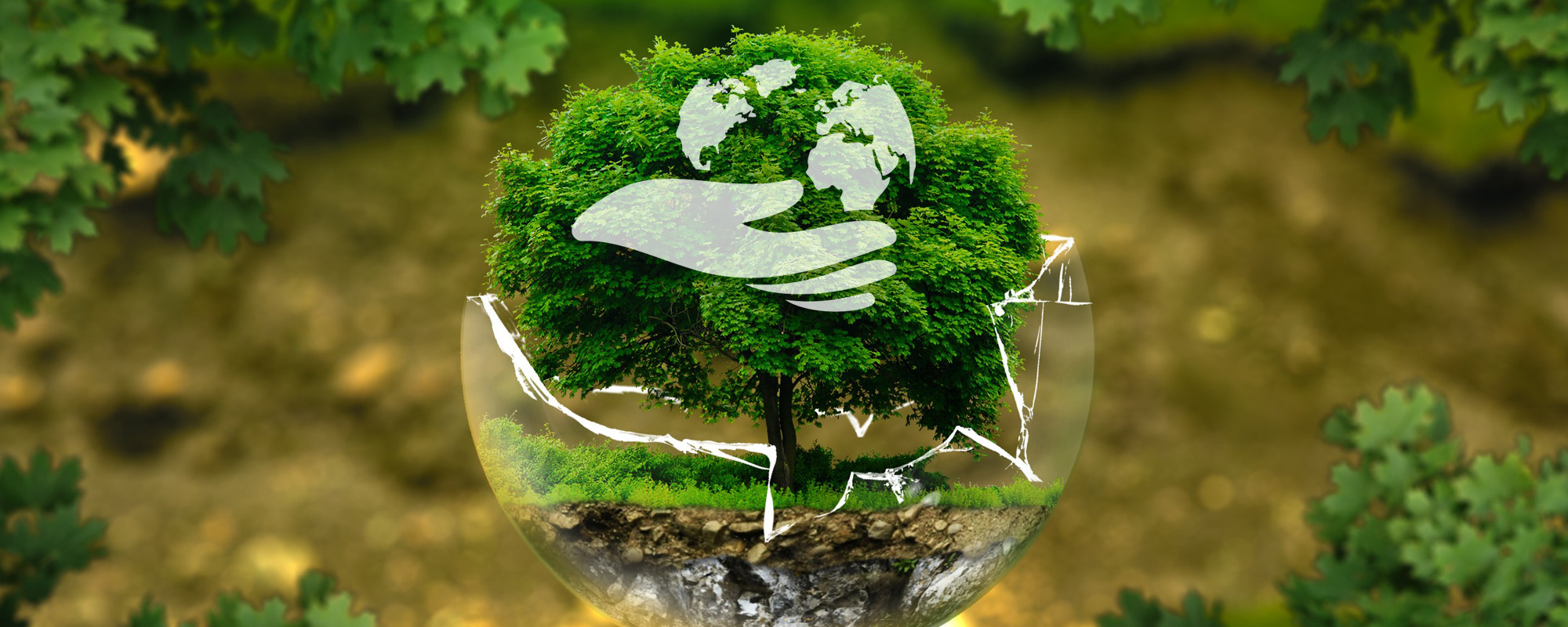 Current Environmental Issues 2019 - University of Bialystok - Poland